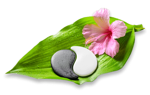 Photo of a leaf with a flower and smooth stones